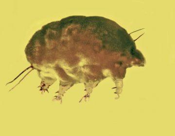 """Científicos descubren """"cerdos del moho"""" atrapados en ámbar de 30 millones de años de antigüedad"""