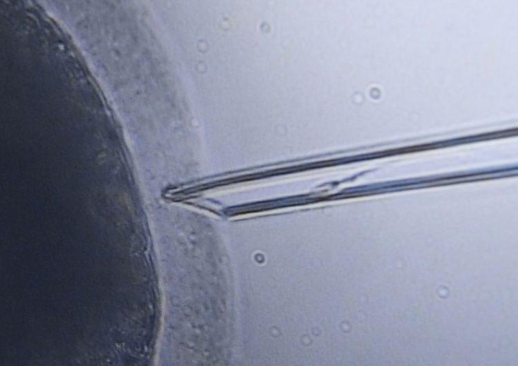 La contaminación también tiene consecuencias en la fecundación in-vitro, dice estudio
