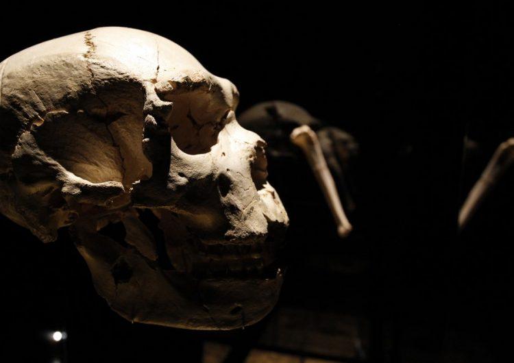 Los monos caminaron sobre sus dos patas millones de años antes de lo que se pensaba