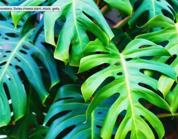 En realidad, tus plantas domésticas no mejoran la calidad del aire en tu casa