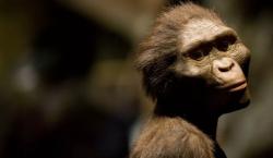 Los grandes simios de hoy día probablemente son más inteligentes…