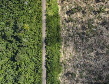 La deforestación es la culpable de los incendios en la Amazonía: estudio