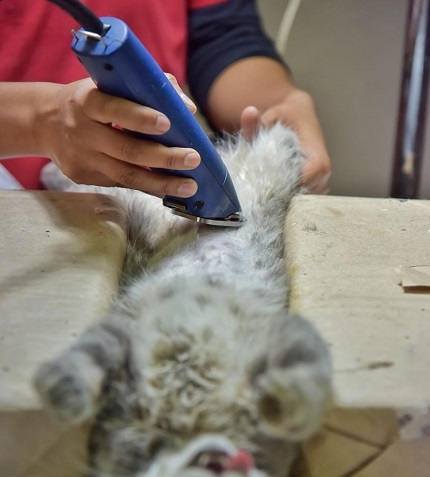 Se realizó jornada de esterilización de mascotas en Jesús María