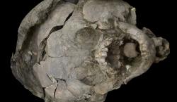 """Descubren entierro antiguo de dos bebés con """"cascos"""" hechos con…"""