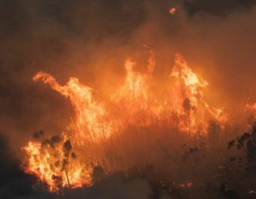 Los incendios de Australia están impactando a cerca de 500 millones de animales: Informe