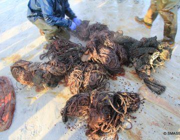 Encuentran cachalote muerto en Escocia; tenía 100 kilos de basura en el estómago