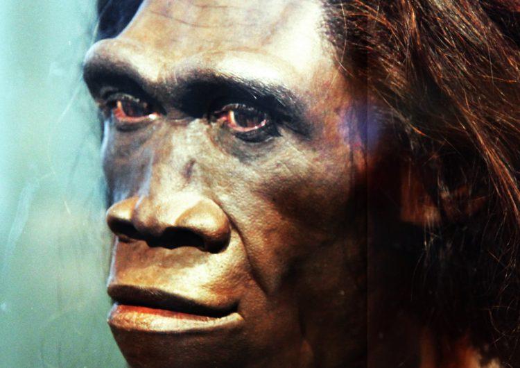El Homo Erectus se extinguió hace 110,000 años, revela estudio