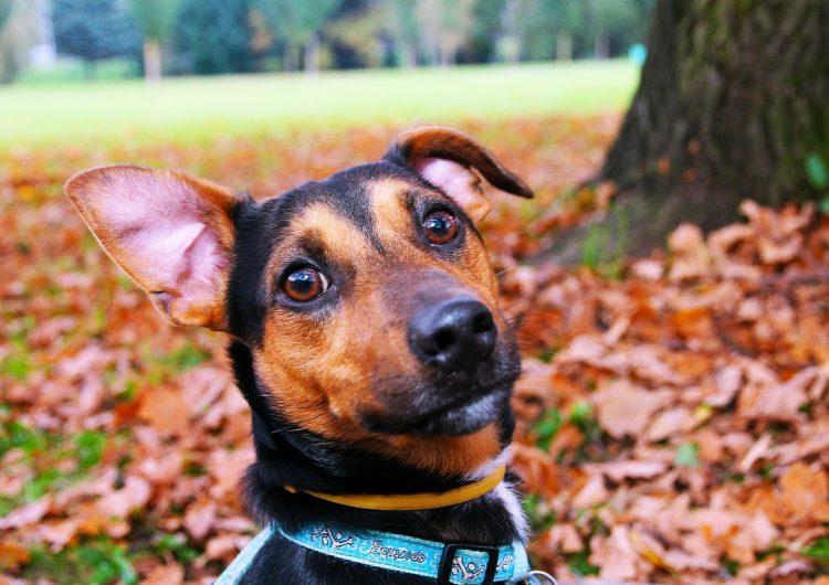 Hallan el eslabón perdido en la evolución de la audición en los mamíferos