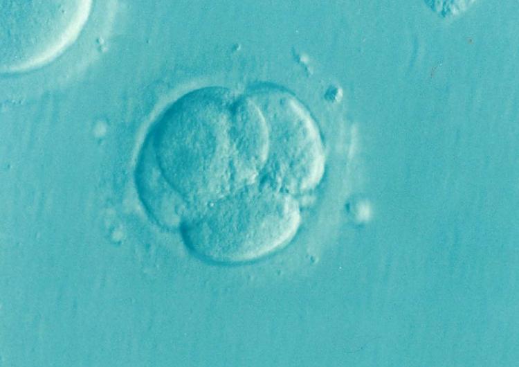 Gemelas chinas nacidas de embriones modificados podrían tener mutaciones, advierten científicos
