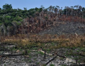 """La Amazonia ha empezado a """"autodestruirse"""", pero aún puede salvarse"""