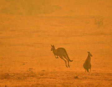 Temperaturas récord y fuertes vientos avivan los incendios forestales en Australia