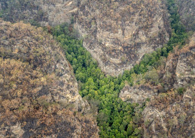 """Bomberos realizan una misión secreta para salvar los """"árboles dinosaurio"""" de los incendios de Australia"""