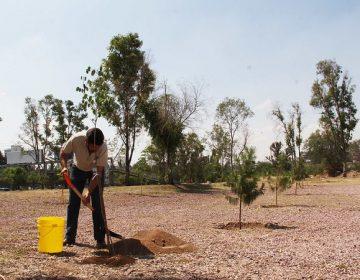 Reforestarán casi 12 mil árboles en Aguascalientes en 2020