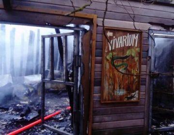 Mueren 57 animales en un incendio en un zoológico de Francia
