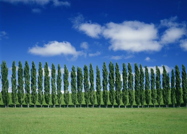 Modifican genes de árboles para evitar que liberen gas relacionado con el cambio climático