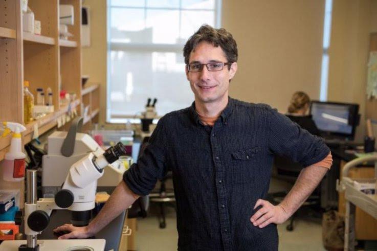 Científicos prolongan en 500 por ciento la expectativa de vida de una especie de gusano