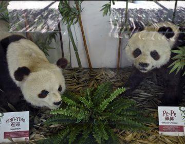 México tiene las únicas dos pandas que no son propiedad de China