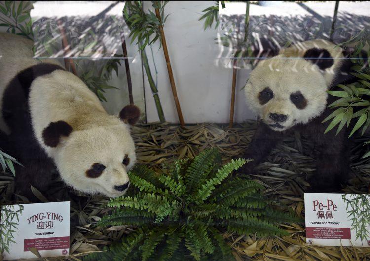 méxico-animales-pandas-china
