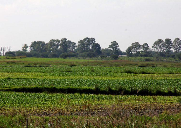 Buscan exportar productos agrícolas de Aguascalientes a Emiratos Árabes