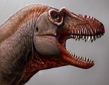 Descubren el fósil de una nueva especie de tiranosaurio en Canadá
