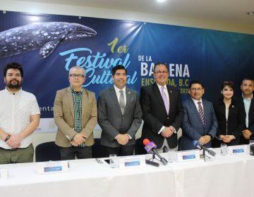 Realizarán Primer Festival Cultural de la Ballena Gris en Ensenada
