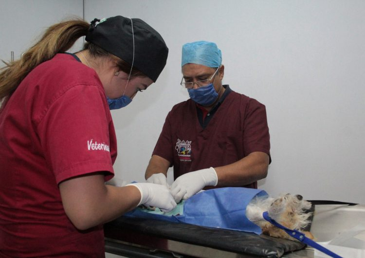Convoca municipio de Aguascalientes a campaña de esterilización canina y felina