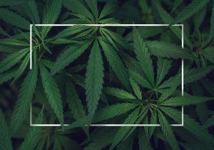 De tiempo y circunstancias | Ley para la marihuana recreativa: cortar la cabeza de la hidra