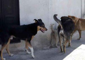 Suman 272 ataques de perros en Puebla, sólo en 2020
