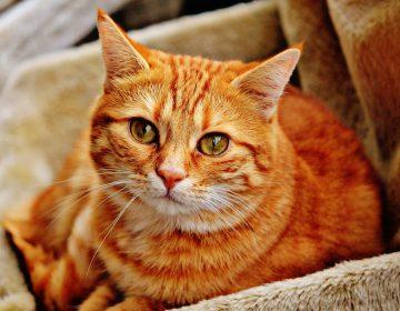 La custodia de un gato desata batalla legal en Londres