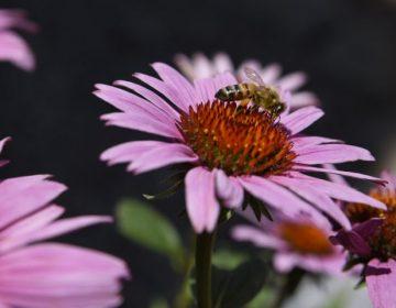 """Científicos descifran más de 1,500 movimientos de la """"danza"""" de las abejas melíferas"""