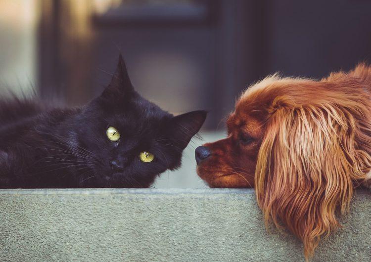 Las mascotas infectadas por coronavirus también estarán en cuarentena en Hong Kong