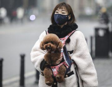 Coronavirus deja en el abandono a miles de mascotas en Wuhan, donde pueden morir de hambre