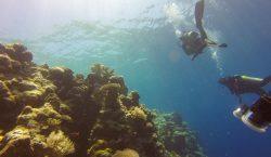 El cambio climático eliminará los hábitats de arrecifes de coral para 2100, alertan científicos