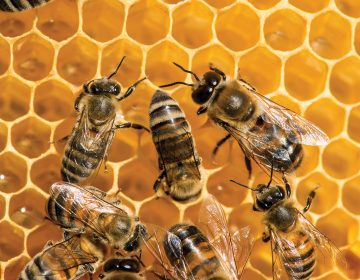 El camino de la miel: de la flor hasta la mesa