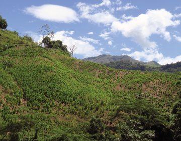 El deseo de cultivadores de coca en Colombia: alternativas viables, no militarización