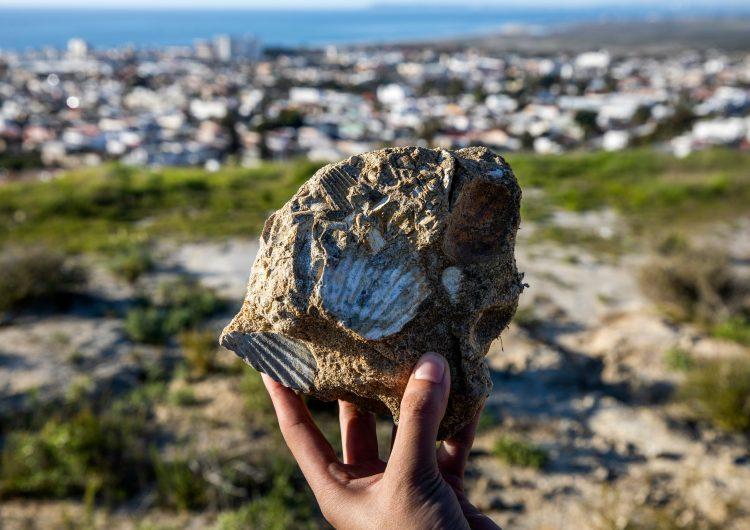 Un hallazgo con millones de años de antigüedad en Tijuana