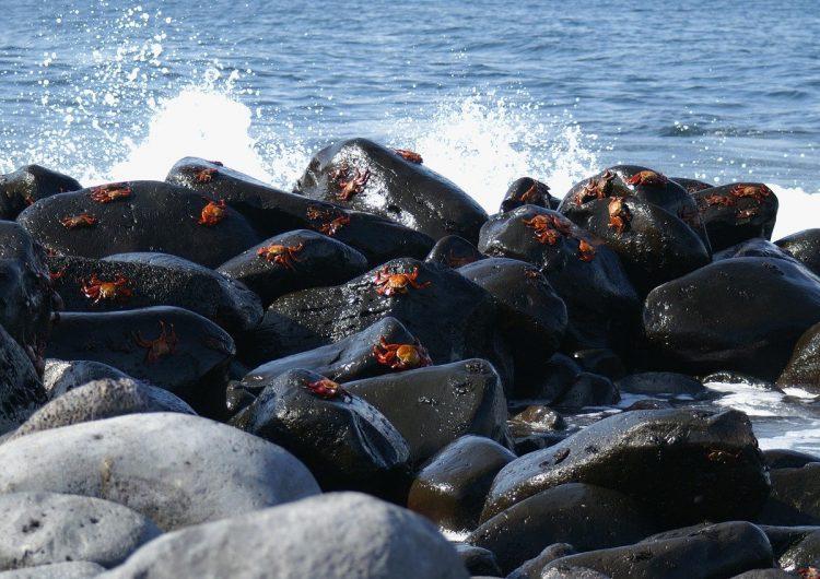 El estrés por los barcos deja indefensos a los cangrejos