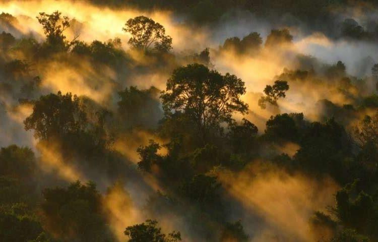 Los bosques tropicales pierden su capacidad de eliminar el carbono de la atmósfera