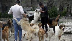 No se debe usar detergente o gel antibacterial en perros…