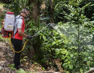 Centroamérica, entre la pandemia de coronavirus y los casos en aumento de dengue
