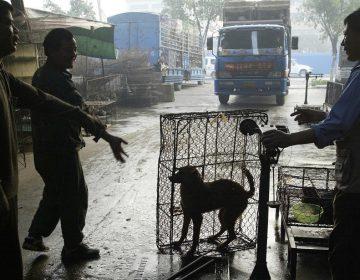 Perros y gatos son excluidos por primera vez de la lista de animales comestibles en China