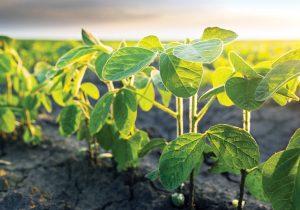 La tierra es nuestro principal proveedor de alimentos