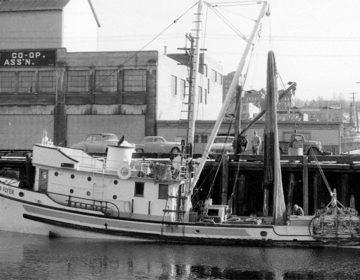 La aventura de un escritor y un biólogo marino por el Golfo de California