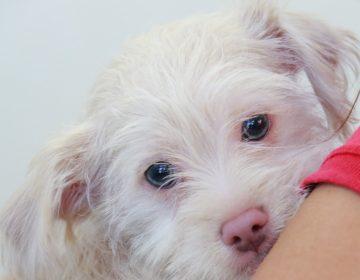 Mascotas no pueden contagiarse ni transmitir Covid-19: especialista