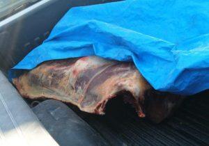 Aseguran más de media tonelada de carne sin refrigerar en puerta de acceso a Aguascalientes