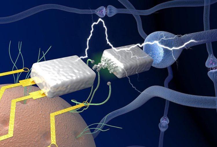 Crean dispositivo que imita el funcionamiento del cerebro humano
