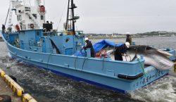 Los países que consideran la caza de ballenas comoo actividades…