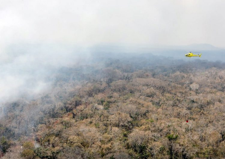 La Amazonia sufre la mayor deforestación en cuatro meses desde 2016
