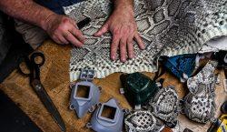Hombre de Florida hace cubrebocas con piel de iguanas y…