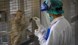 Monos escapan de laboratorio con muestras de sangre positivas a…